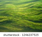 green algae in clear running... | Shutterstock . vector #1246237525