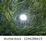 intertwined threads. the... | Shutterstock . vector #1246288615
