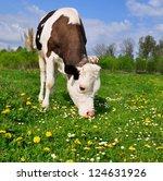 the calf on a summer pasture | Shutterstock . vector #124631926
