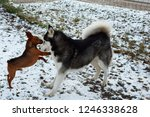 two different breeds of dogs... | Shutterstock . vector #1246338628