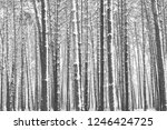 black and white photo of winter ...   Shutterstock . vector #1246424725