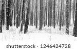 black and white photo of winter ...   Shutterstock . vector #1246424728