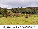 Deers in the Hortons Plains National Park in Sri Lanka