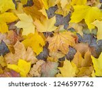 colorful beautiful autumn... | Shutterstock . vector #1246597762