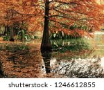 taxodium distichum in ming... | Shutterstock . vector #1246612855