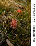hiking through the schwarzwald...   Shutterstock . vector #1246641802