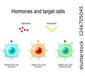 hormones  receptors and target... | Shutterstock .eps vector #1246705045
