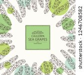 background with caulerpa  sea... | Shutterstock .eps vector #1246708582
