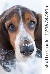 basset hound dog with snowflake ...   Shutterstock . vector #1246787845