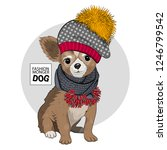 vector dog with hat and grey...   Shutterstock .eps vector #1246799542