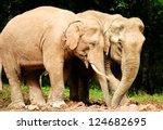 asian elephants in wild thailand | Shutterstock . vector #124682695