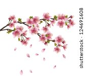 Stock vector sakura blossom pink japanese cherry tree with flying petals isolated on white background vector 124691608