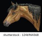colorful portrait of bay welsh... | Shutterstock .eps vector #1246964368