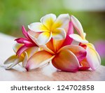 beautiful magnolia flowers. | Shutterstock . vector #124702858