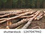 environment  nature and... | Shutterstock . vector #1247047942