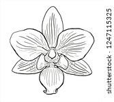 orchid vector  flower sketch ... | Shutterstock .eps vector #1247115325