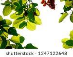 green leaf on light   Shutterstock . vector #1247122648