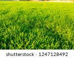 green football field in stadium | Shutterstock . vector #1247128492