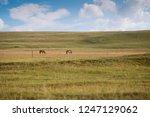 panoramic scenery of salt lakes ... | Shutterstock . vector #1247129062