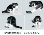 Stock photo cat playing with touch screen smart phone 124715572