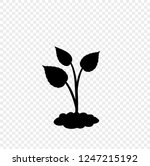 black silhouette of sprouting... | Shutterstock .eps vector #1247215192