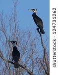 great cormorant in winter | Shutterstock . vector #124731262