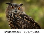 The Great Horned Owl   Bubo...