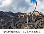 burnt trees on the volcano etna   Shutterstock . vector #1247465218