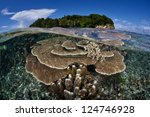 small reef fish aggregate to a... | Shutterstock . vector #124746928