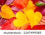 colorful autumn leaves.... | Shutterstock . vector #1247499385