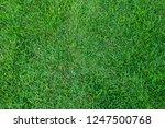 green grass texture for... | Shutterstock . vector #1247500768