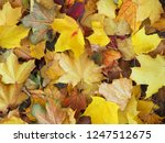 colorful beautiful autumn... | Shutterstock . vector #1247512675