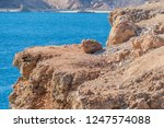 red sea  sharm el sheik  egypt | Shutterstock . vector #1247574088