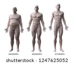 3d rendered medically accurate...   Shutterstock . vector #1247625052