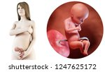3d rendered medically accurate... | Shutterstock . vector #1247625172