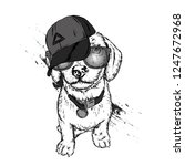 cute dog in cap and glasses.... | Shutterstock .eps vector #1247672968
