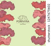 background with porphyra ... | Shutterstock .eps vector #1247675602