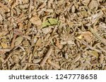 bedouin herbal tea   Shutterstock . vector #1247778658