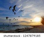 flock of seagulls and birds...   Shutterstock . vector #1247879185