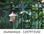 blue jay and cardinal birds... | Shutterstock . vector #1247973142