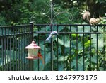 Blue Jay And Cardinal Birds...