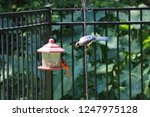 blue jay and northern cardinal... | Shutterstock . vector #1247975128