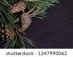 pine branches with cones ... | Shutterstock . vector #1247990062
