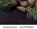 pine branches with cones ... | Shutterstock . vector #1247990065