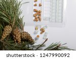 glass bottles with corks in the ... | Shutterstock . vector #1247990092