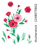 pink and red anemone flowers  ... | Shutterstock . vector #1248075802