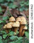 Mushroom Shaggy Scalycap ...