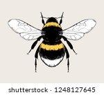 Bumblebee  Bombus  Bee. Highly...