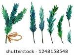 watercolor spruce twigs... | Shutterstock . vector #1248158548
