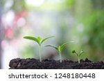 young green plant growing | Shutterstock . vector #1248180448